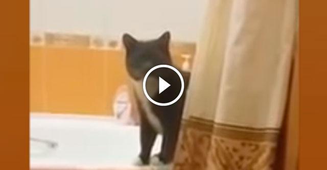 Очень серьёзный разговор хозяйки с провинившимся котом