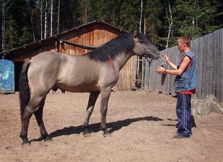 Фото лошади мышастой масти