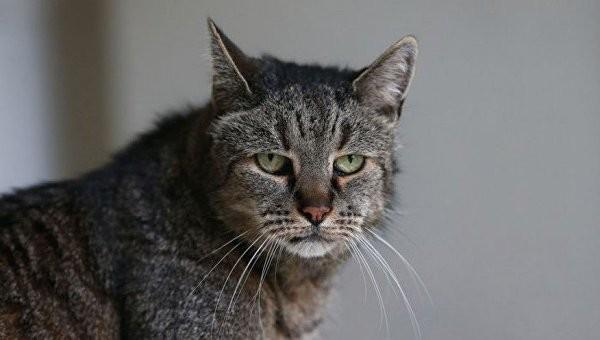 Умер старейший в мире кот