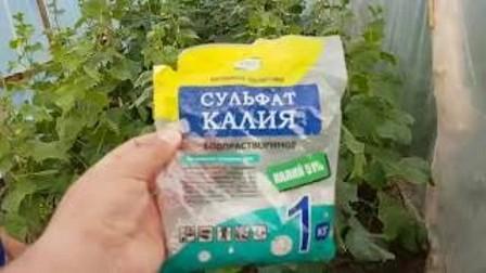 Инструкция по выращиванию огурцов