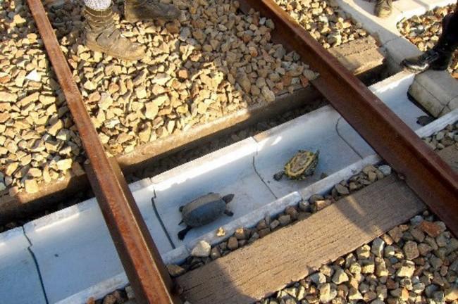 Тоннель для черепах, остров Хонсю, Япония доброта, животные, мир