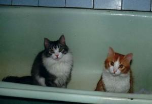 Кошка писает в ванну и раковину. Что делать?
