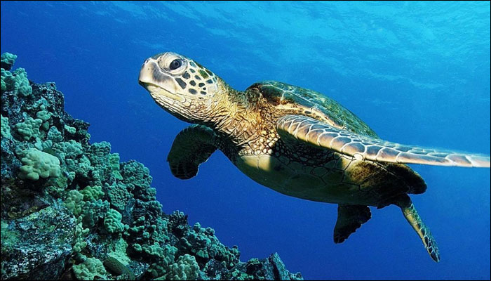 https://english.cdn.zeenews.com/sites/default/files/2017/03/06/576608-sea-turtle.jpg