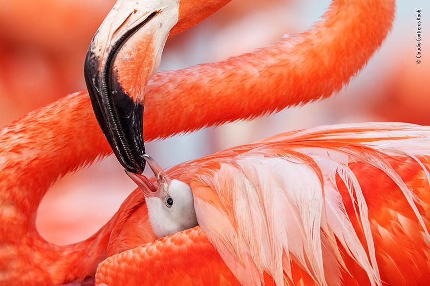 25 лучших фото дикой природы, сделанных в этом году