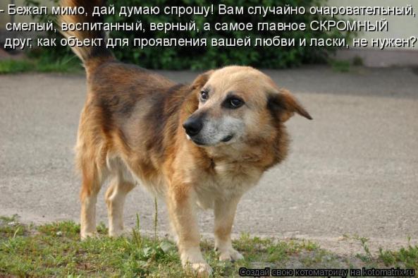 Скачать грустную песню про собак