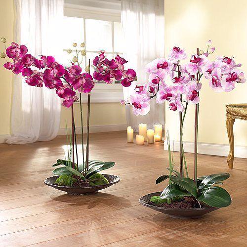 Цветение орхидея в домашних условиях