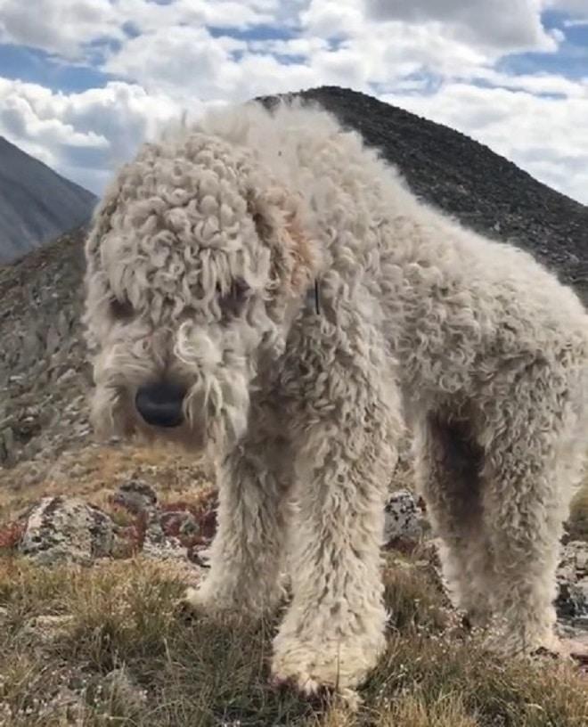 Потеряв в аварии маму, девушка была уверена, что ее пес тоже погиб. А он просто ждал