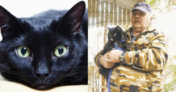 Невероятные случаи спасения людей животными