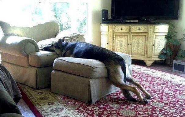 25 собак, которые формально не нарушают правила