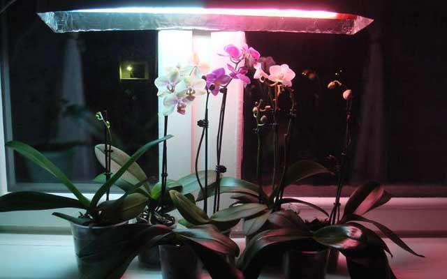 plants1216-13.jpg