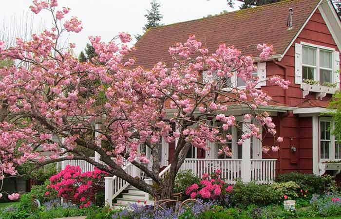 Вот какое дерево нужно посадить у дома, чтобы привлечь достаток и благополучие