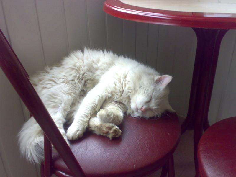 А этот в кафе заглянул, видимо рыбку запил и переваривает... балаклава, интересное, коты, юмор