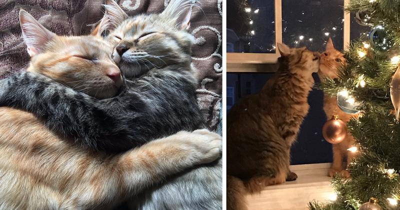Кот с кошкой так влюблены друг в друга, что не могут скрыть свои чувства