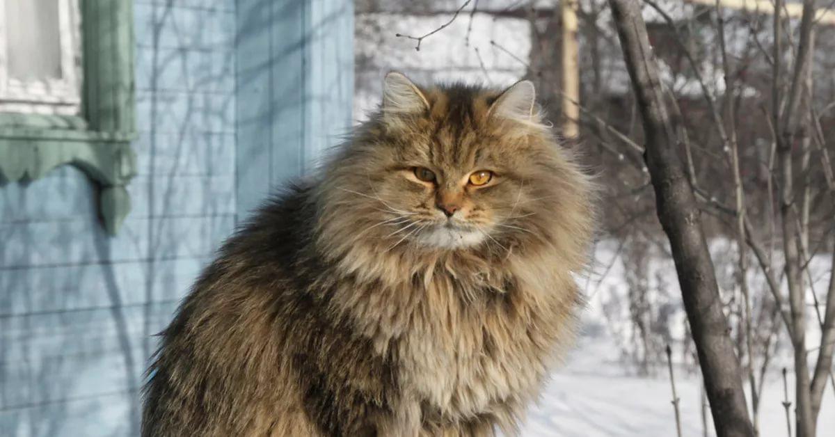 Жил-был кот Мурзик