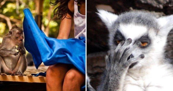 20 весёлых представителей животного мира, которые демонстрируют самые неподдельные эмоции