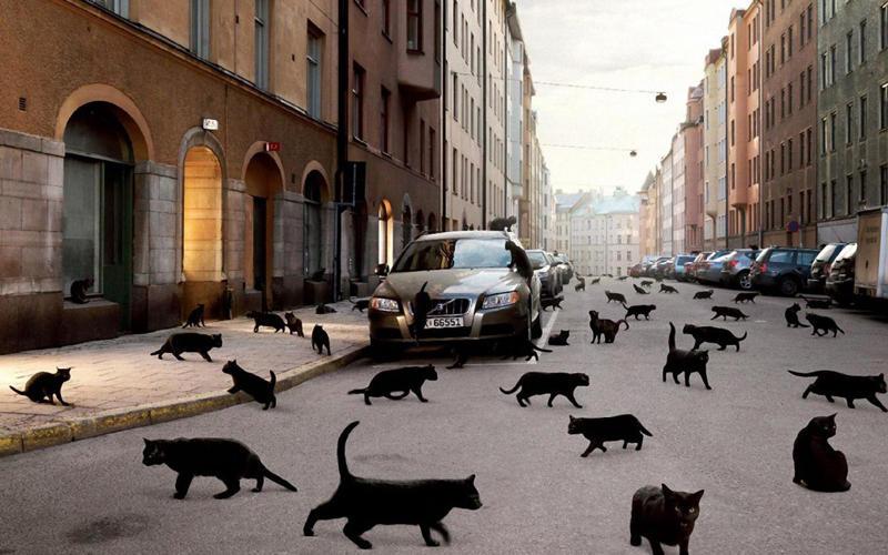 Плюнь через плечо, черная кошка дорогу перебегает - к удаче: странные приметы, в которые мы верим обычаи и традиции, приметы, суеверия