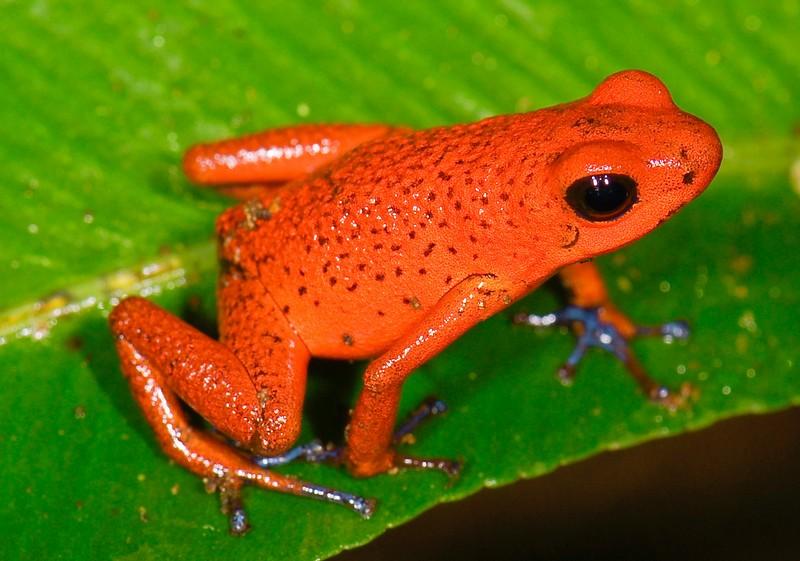 Топ-25: по-настоящему красные животные, на которых стоит взглянуть