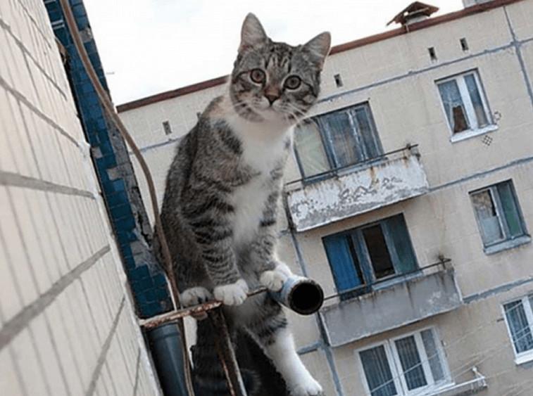 Спасая кота, 7-летний мальчик упал с 5-го этажа! Прибывшим на место врачам он сказал: «Не бойтесь, дяденьки, я же сначала выкинул матрас!»