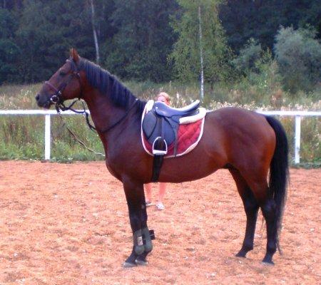 Гнедая масть лошадей: фото описание