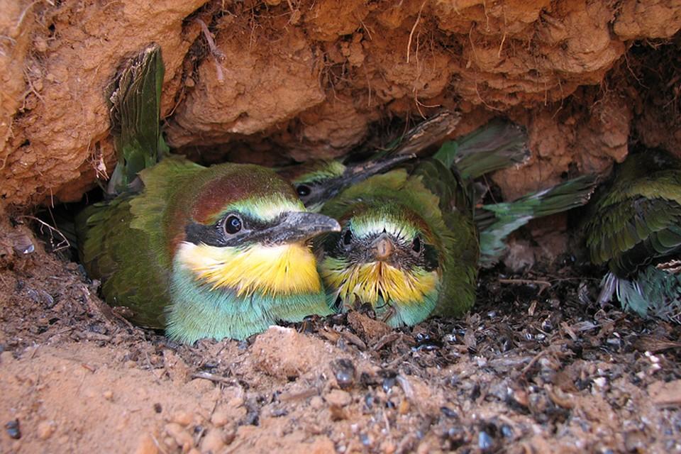 Редких птиц нашли под землей в Нижнем Новгороде