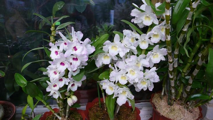 Топ-10 самых красивых цветов в мире