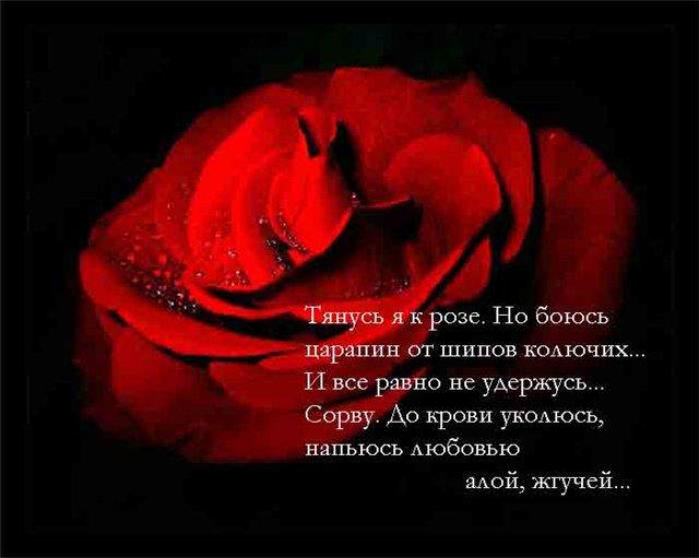 Поздравление будь как роза 246