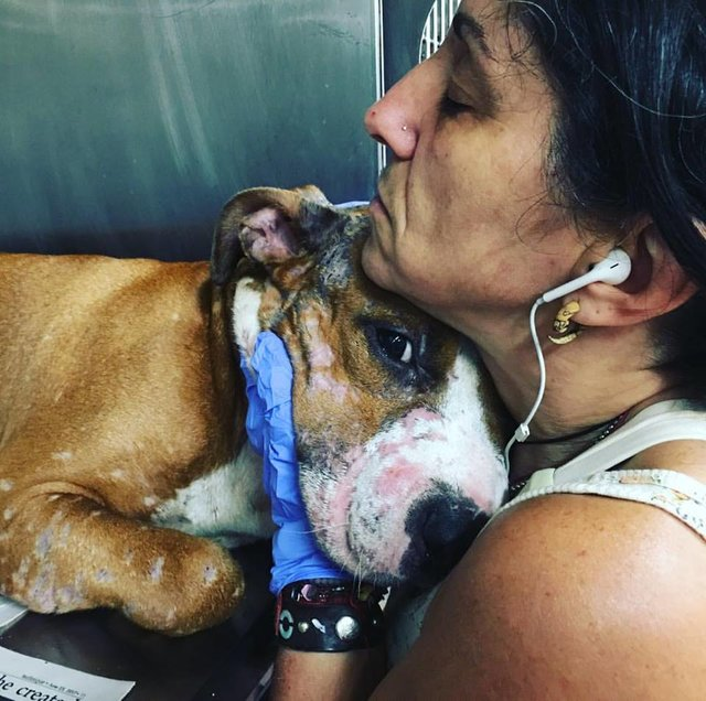 Тело – в шрамах, в глазах – боль… Добрый пёс Дункан тоже хочет рассказать вам свою историю