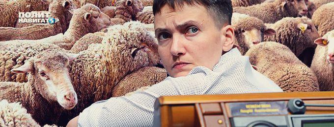 Баранье-козий скандал в Верховной Раде: Порошенковцы требуют наказать Савченко за работу на Кремль