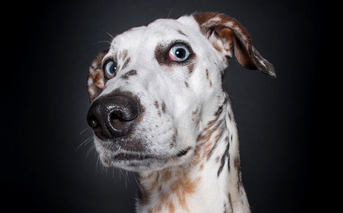 """""""Совсем как человек"""": шикарные портреты собак, сомневающихся в адекватности фотографа"""