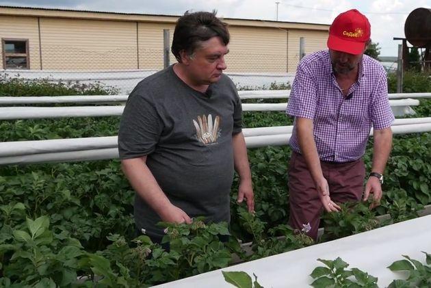Картофель в грядках-коробах - это урожайно!
