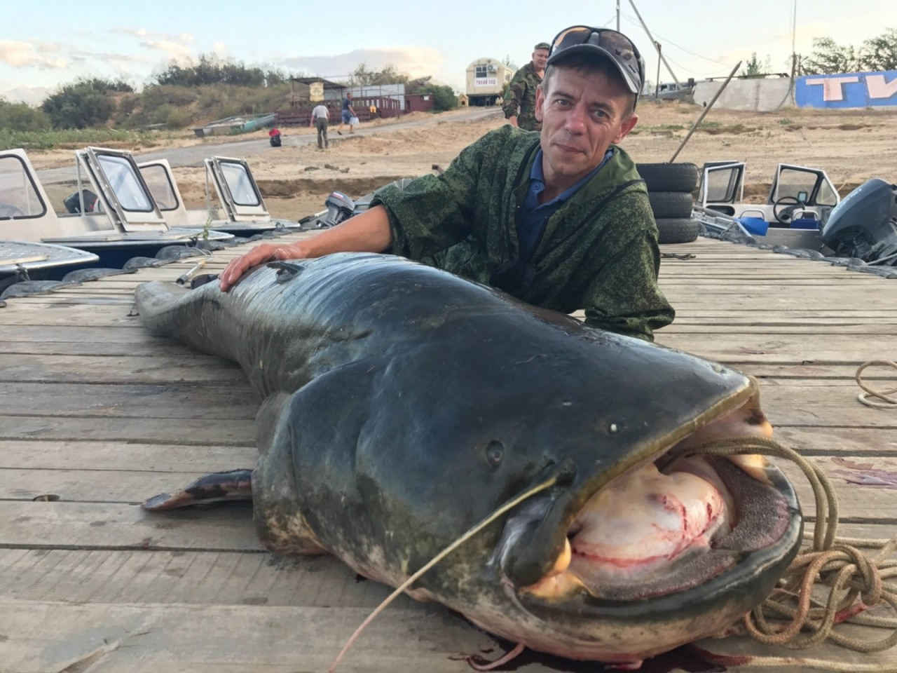 Фотофакт: в Астрахани поймали гигантского сома