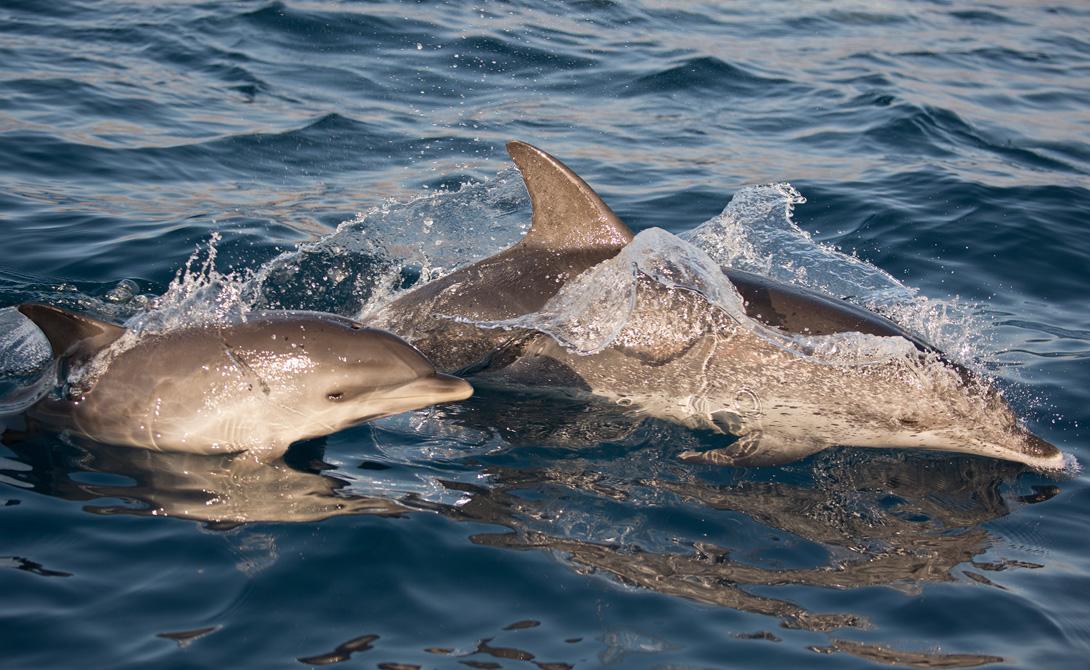 Страшные и отвратительные тайны дельфинов