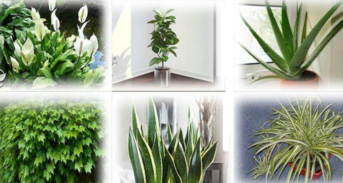 Растения – кислородные бомбы, отличные очистители воздуха