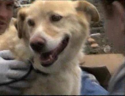 Собака спасла другую собаку из под завалов (видео)