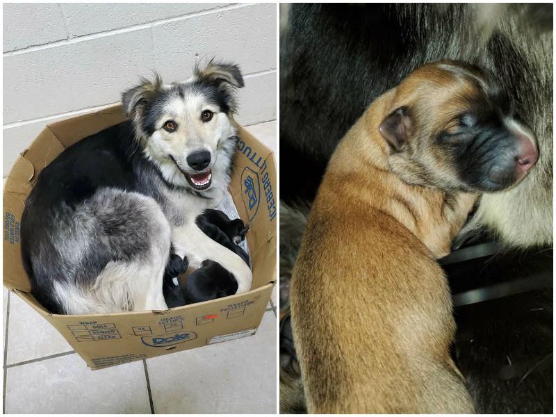 В обмотанной скотчем коробке билась мама-собака с 9 щенятами