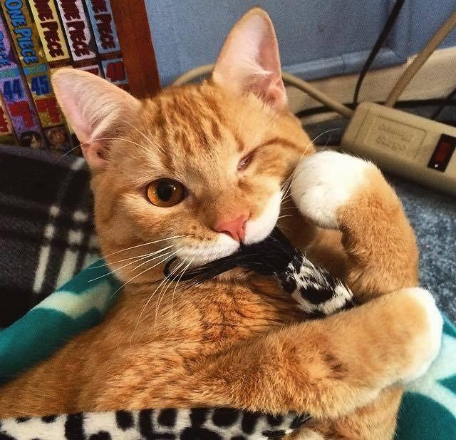 Одноглазый кот Чарли