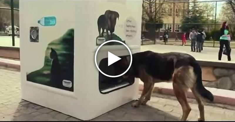 Автомат, который сам кормит бездомных животных. Гениальное изобретение в Стамбуле