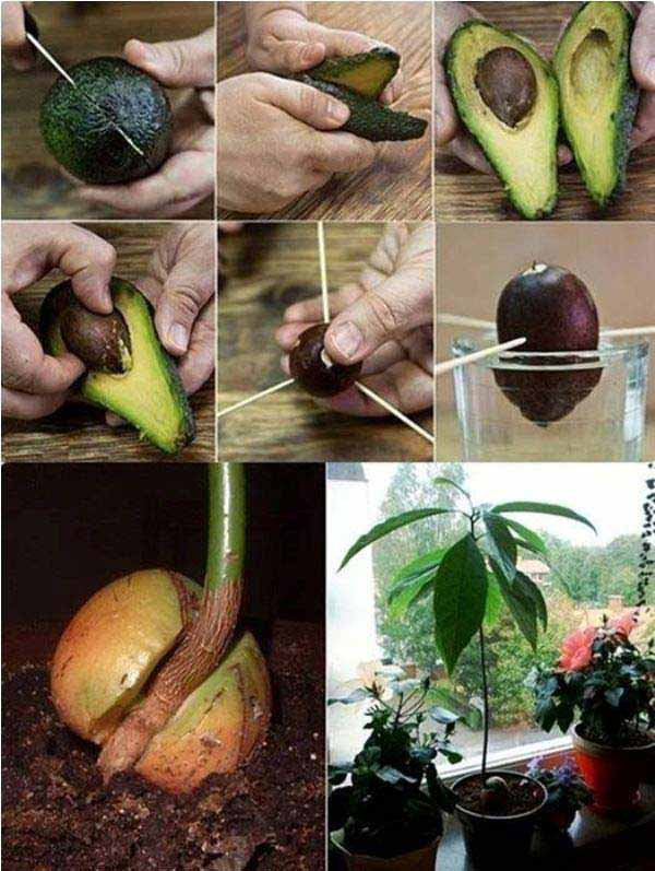 24-Highly-Creative-and-Clever-Gardening-Tricks-to-Enhance-Garden-homesthetics-decor-24