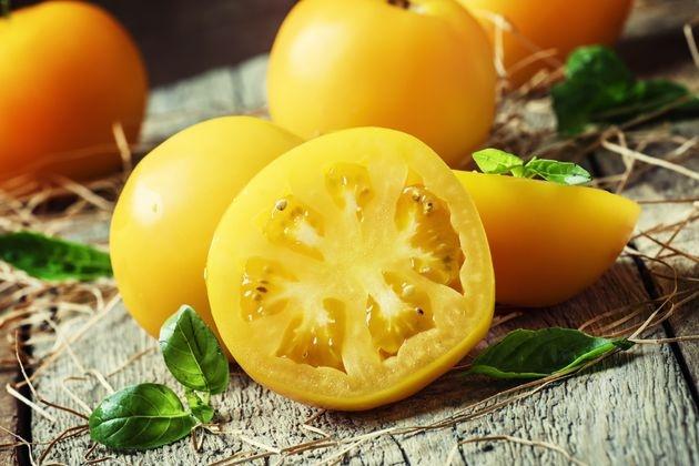 Золотые томаты, не требующие теплицы