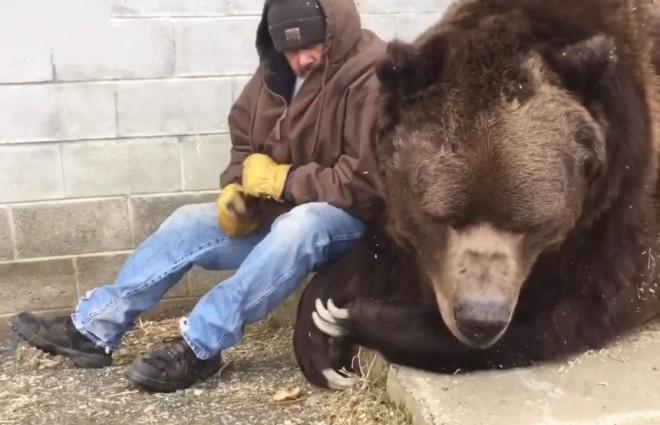 Добрый лесоруб утешил огромного медведя обняв по-братски