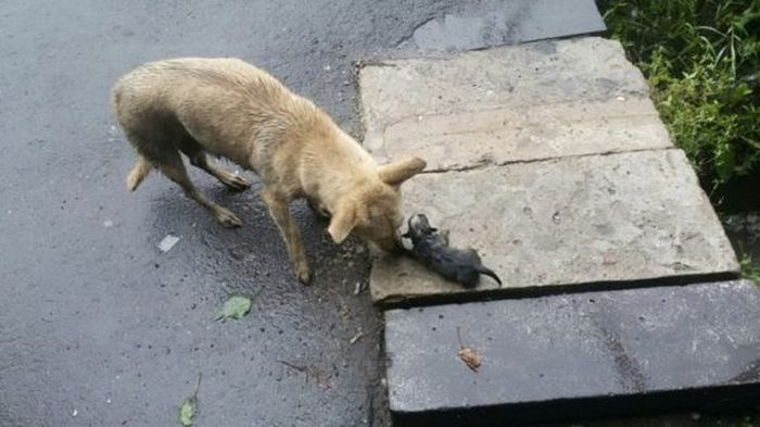 В Омске мужчина залез в сточную канаву, чтобы спасти тонущих щенков (6 фото)