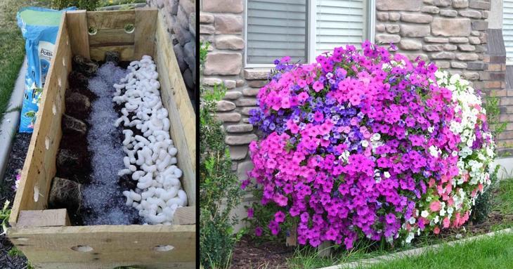 Ещё одна замечательная идея для дачи, которая порадует цветоводов (10 фото)