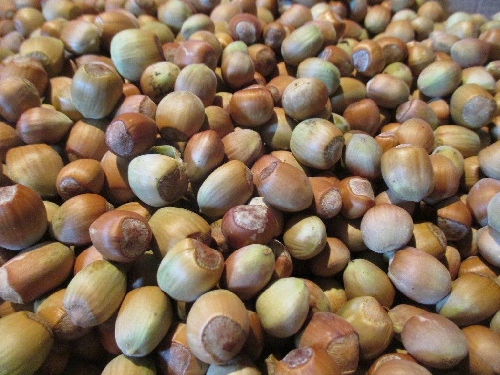 Грецкий орех в огороде