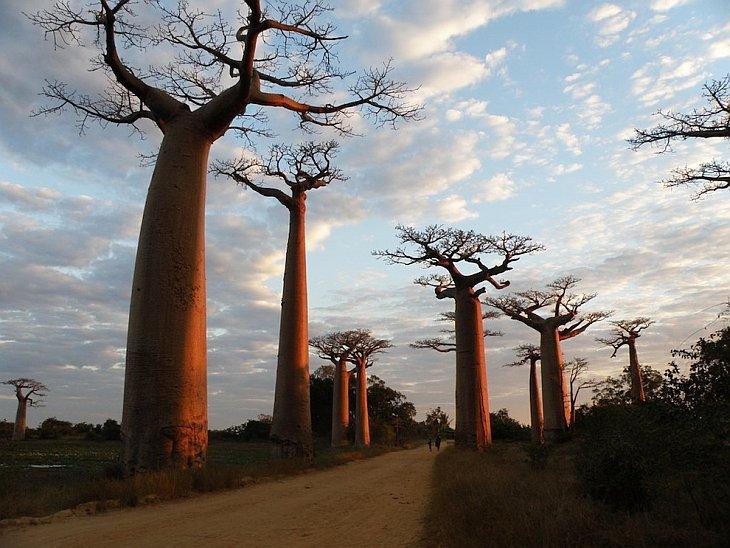 Необычное дерево в мире в фотографиях