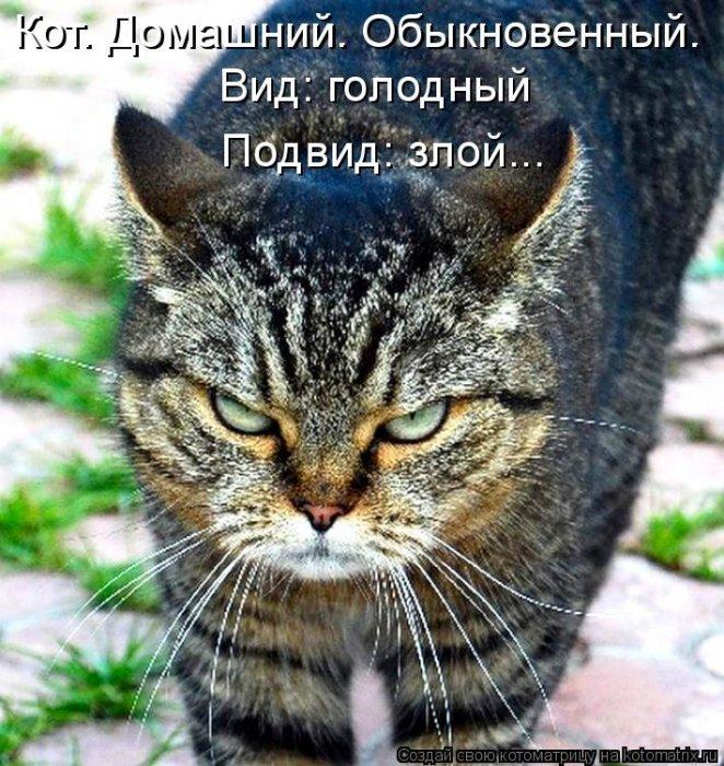 Басня. Голодный кот