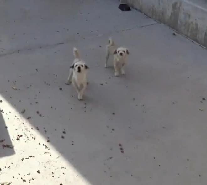 Бездомные собачки боялись волонтеров и даже пытались кусаться. Но люди изменили их судьбу