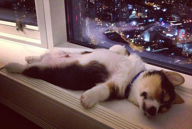 30 фото классных щенков, которые могут уснуть где угодно и как угодно!