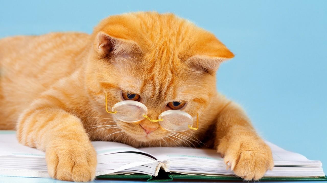 Книжные лайфхаки. Как быстро читать и больше запоминать