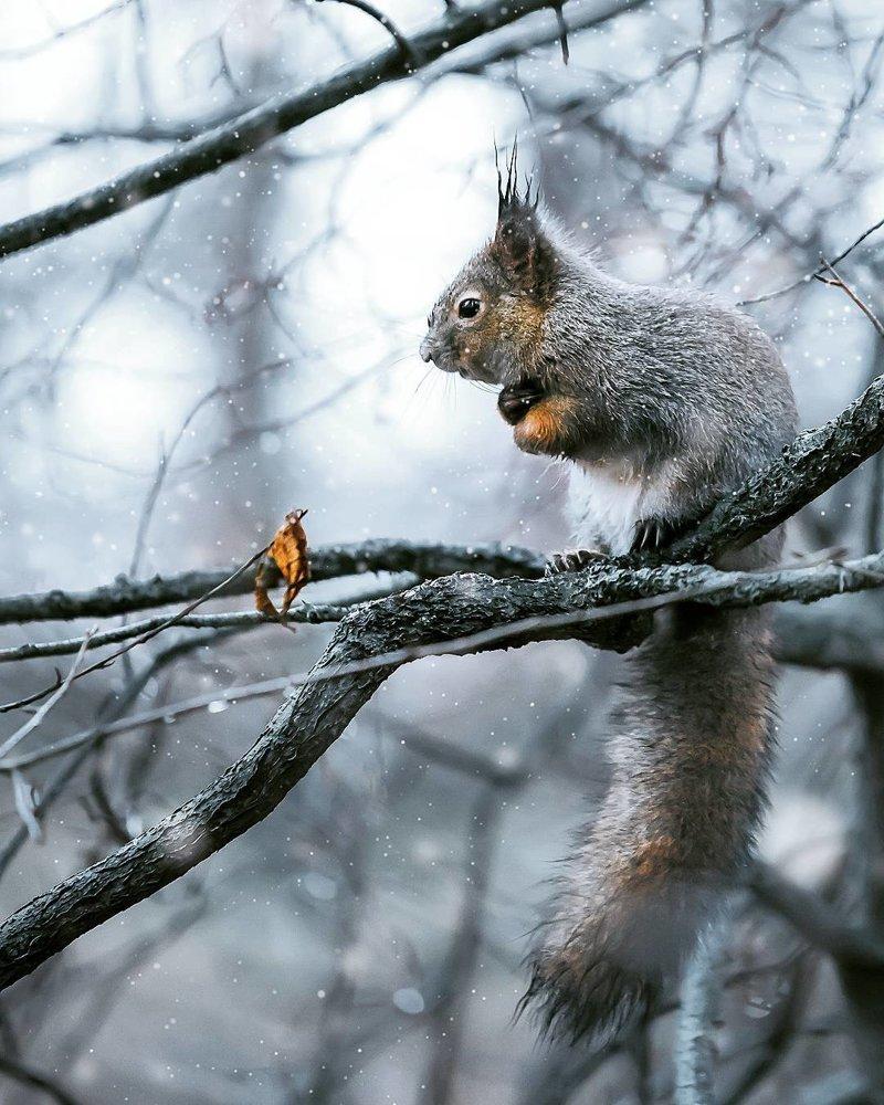 «Дикие земли Финляндии»: сновидческие портреты животных от Иоахима Мунтера