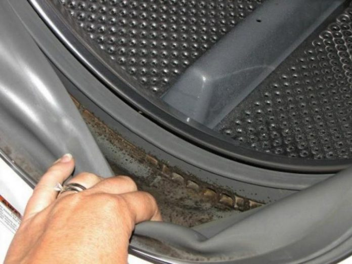 Как удалить плесень со стиральной машины для предотвращения респираторных и кожных инфекций
